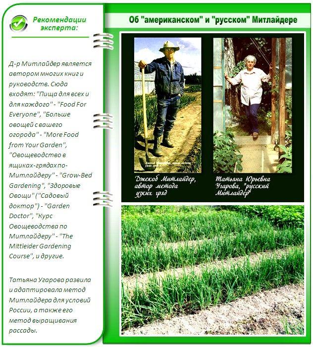 Грядки по мітлайдера: як отримати завидний урожай без клопоту?