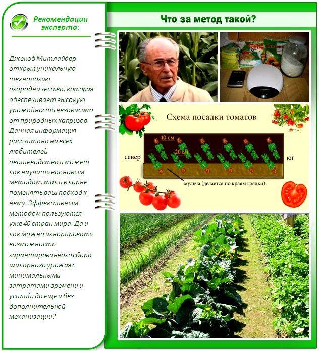 Як облаштувати город по мітлайдера і виростити по-справжньому богатирські овочі