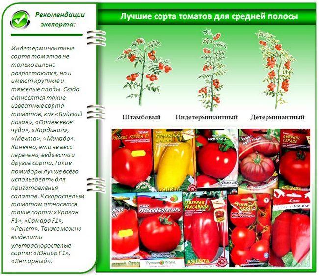 Насіння помідорів для теплиці