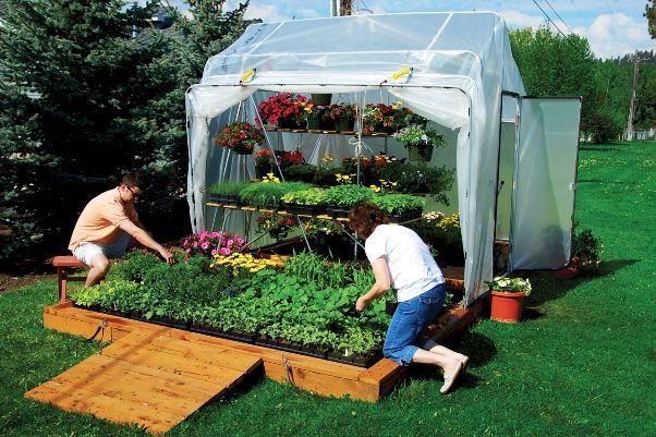 Зелень в теплиці: огляд класичних і нестандартних способів вирощування